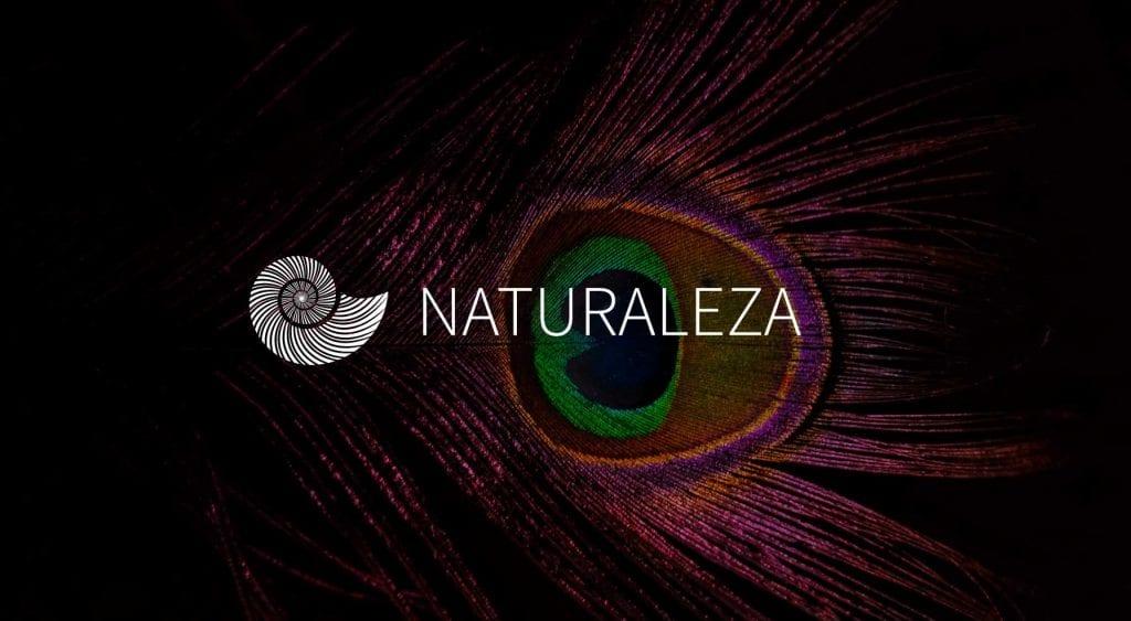 oaxaca-purpura-mixteco-artesanos-fashion