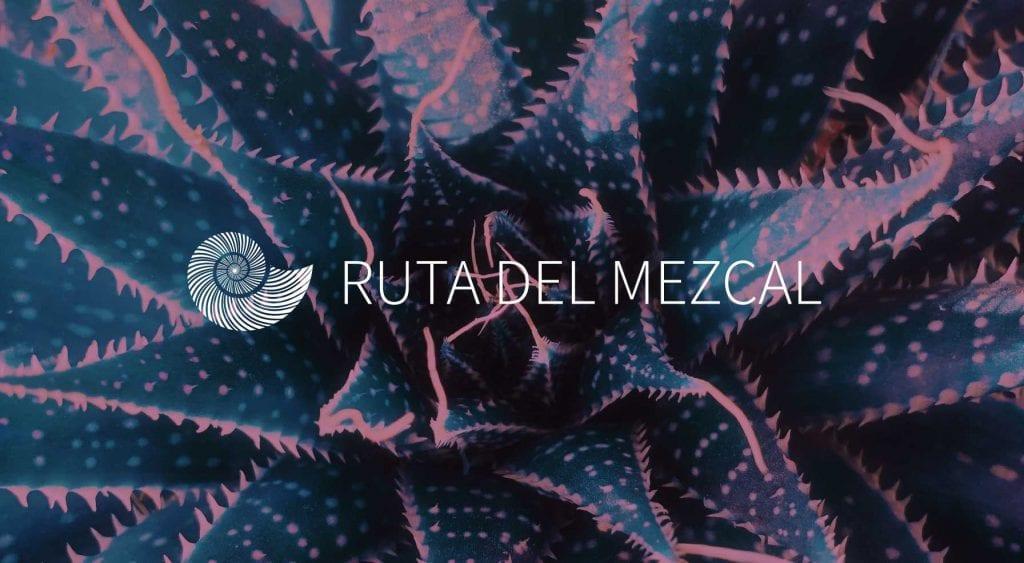 purpura-mixteco-la-ruta-del-mezcal-oaxaca